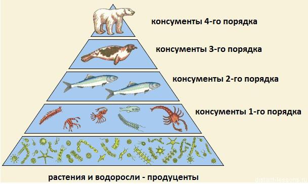 pishevaja-piramida